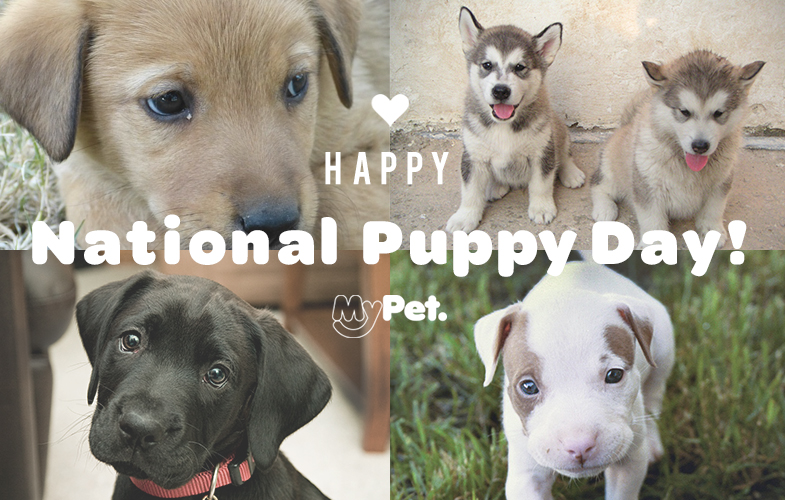 http%3A%2F%2Fmypet.guru%2Fnational-puppy-day-pictures%2F