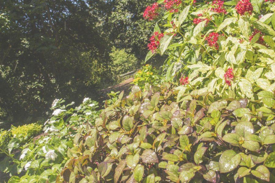 GSU+Botanical+Gardens