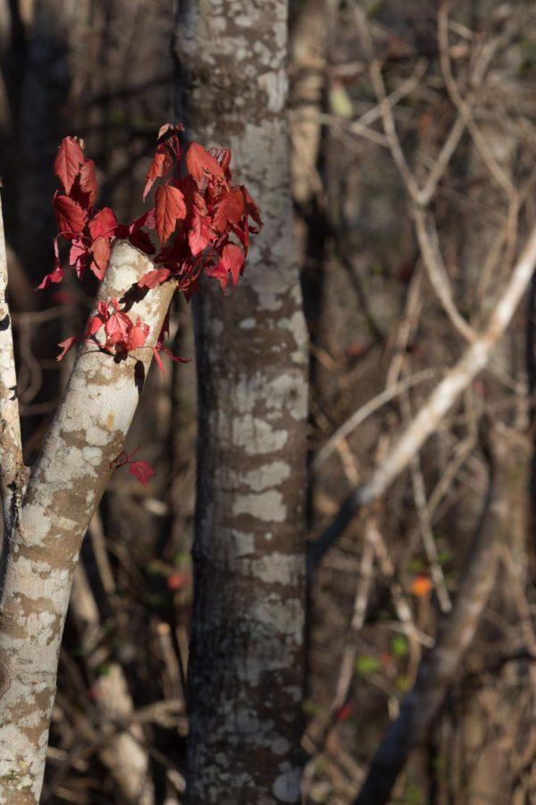Blackwater Preserve: Statesboro's Best Kept Secret
