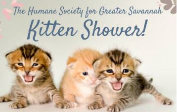 Local Humane Society prepares for kitten season with shower