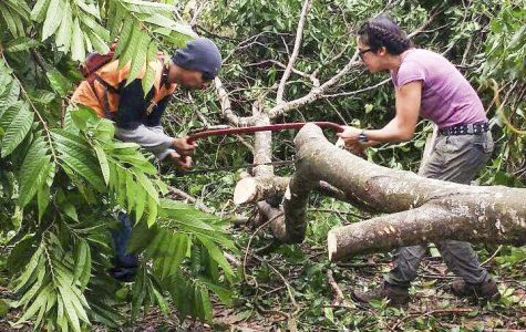 Ariel Guggino and one of her cousins saw a downed tree into sections so that they can remove it in Fajardo, Puerto Rico.
