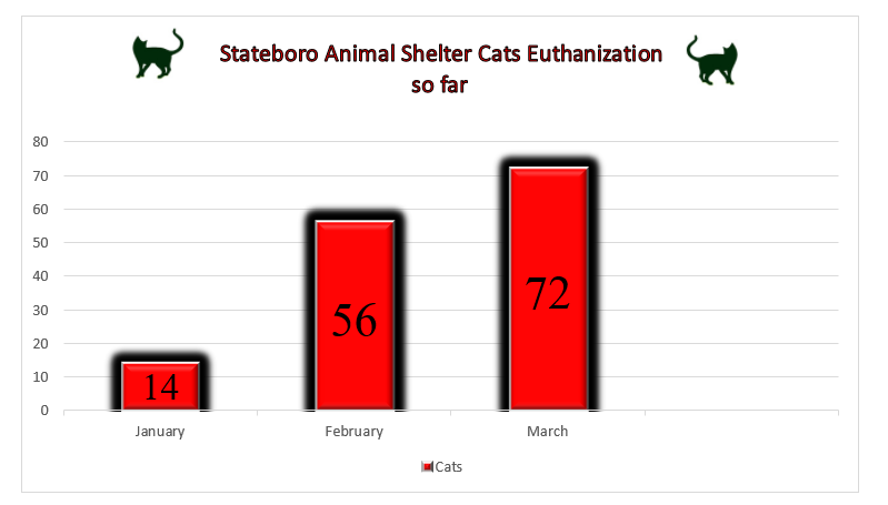 Euthanizations of stray cats on the rise in Statesboro