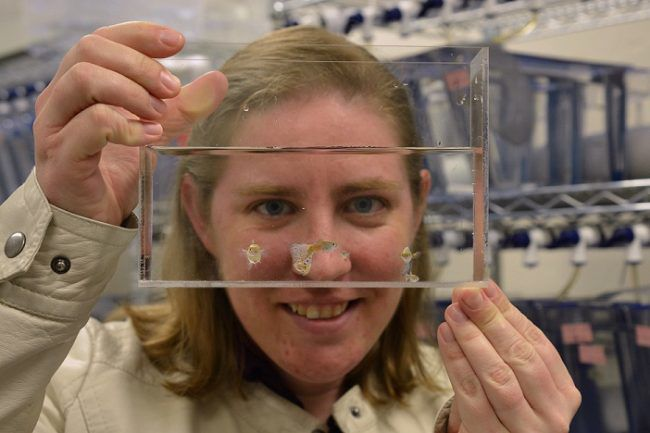 Emily Kane, assistant biology professor, Ph.D., holds a guppy kit that will be used to teach grade school students about evolution.