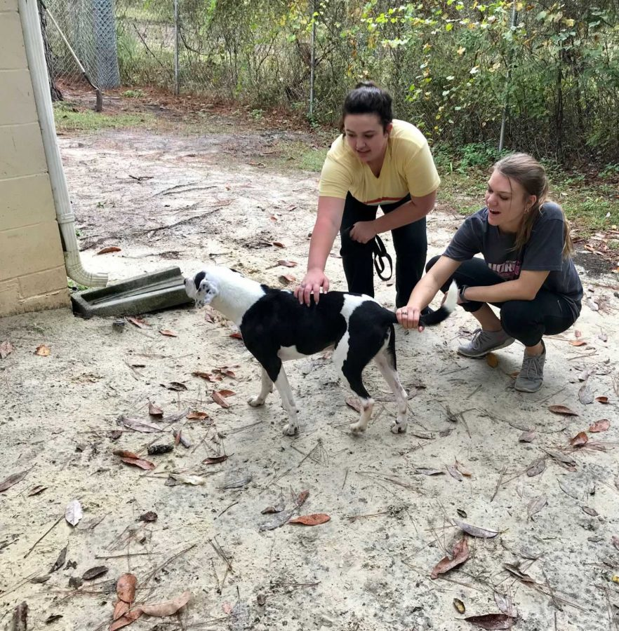 Ryley Balliew, 18, and Kinsey Morelock, 20, play with dog Georgie outside in the play yard. Both girls are sorority sisters from Zeta Tau Alpha who came as a volunteer group to the shelter on Friday, Nov. 9.