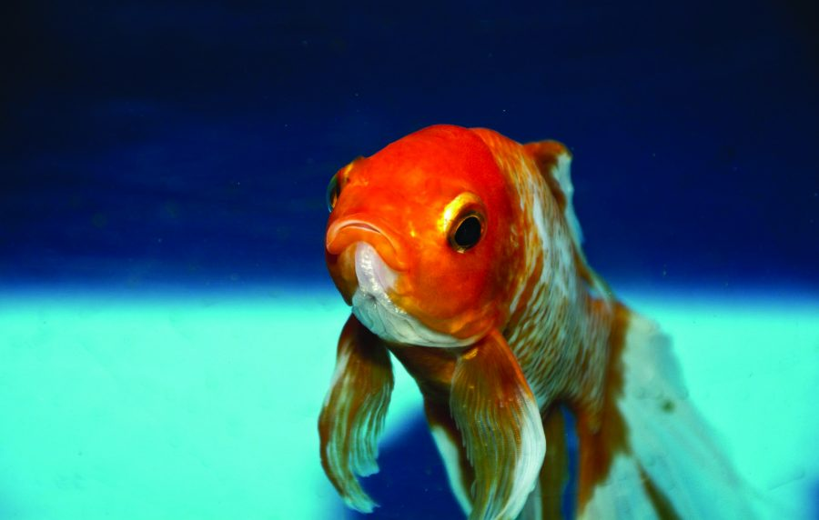 Opinion: Big Fish, Little Bowl
