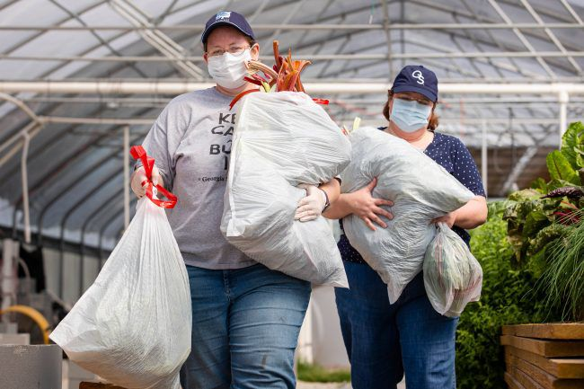 SARC curator Brigette Brinton and Cheryl Ciucevich, director of development for the College of Science and Mathematics, carry produce from the aquaponics farm. They donated the leafy greens to America's Second Harvest of Coastal Georgia.