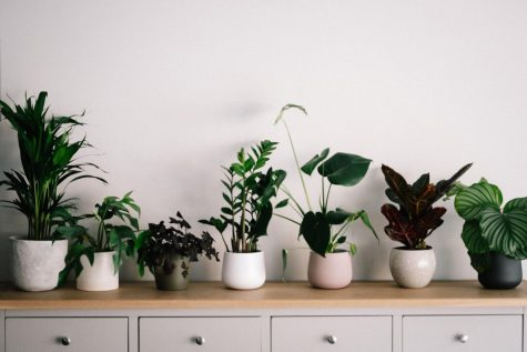 Liven Up Your Home With Easy House Plants