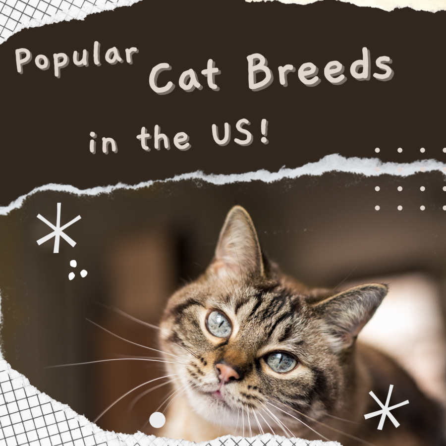 Popular+Cat+Breeds