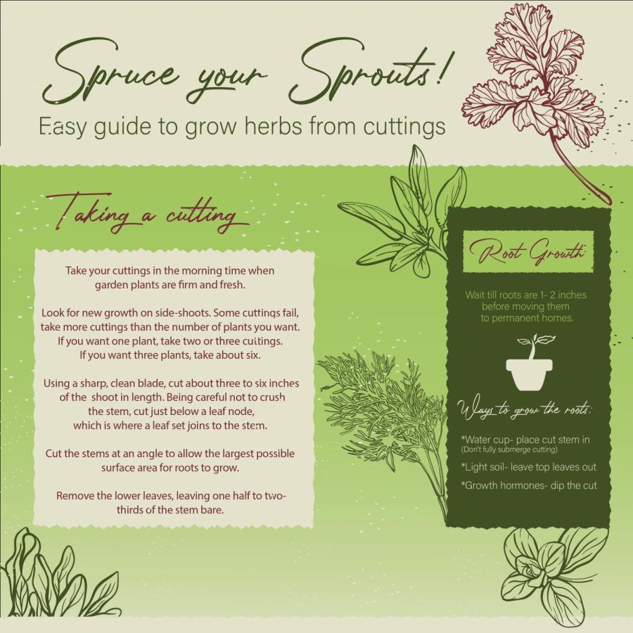 Simple+Herb+Propagation