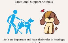 Service Animals vs Emotional Support Animals